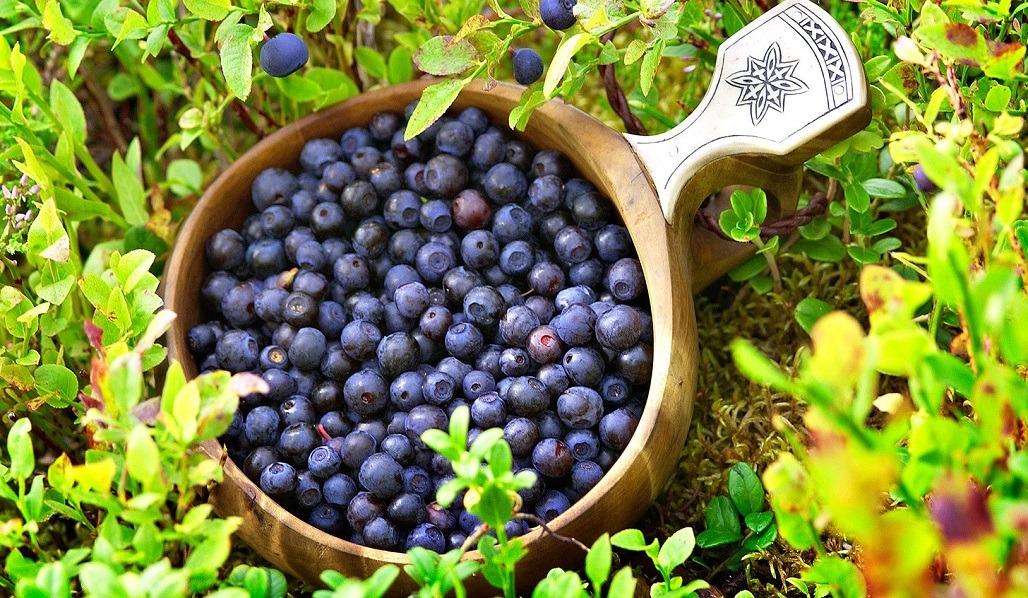 frutti di bosco in lapponia